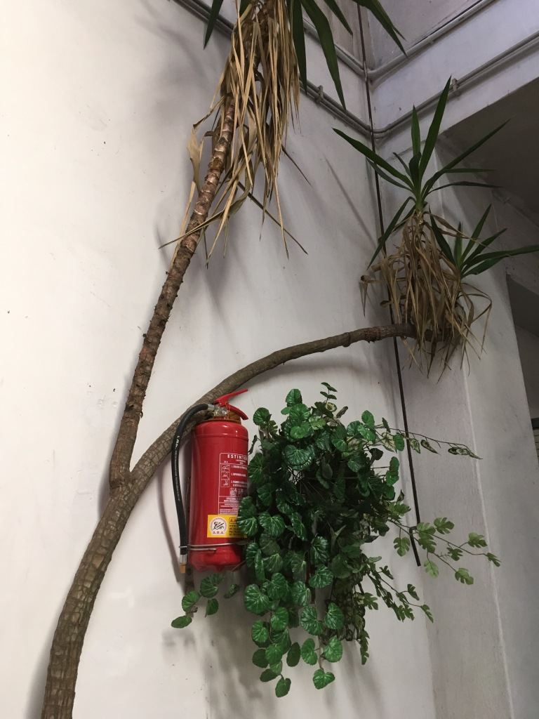 Fire extinguisher, nature, plants, fire safety plants